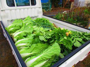 滋賀の野菜